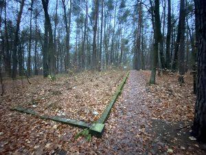 mogiły żydów zamordowanych przez hitlerowców bor Tajęcina głogów małopolski