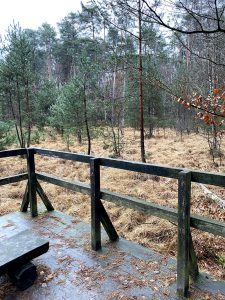 Rezerwat przyrody Bór Tajęcina - Głogów Małopolski k. Rzeszowa